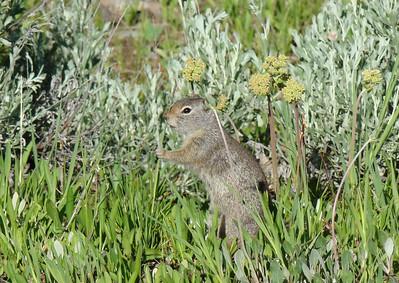 Pas trop d'animaux, juste ce squirrel accroché à son brin d'herbe