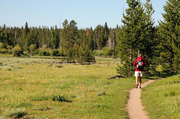 Le chemin erre dans la meadow
