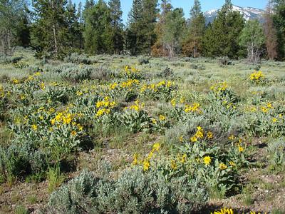 Et nous cheminons dans des champs de fleurs jaunes